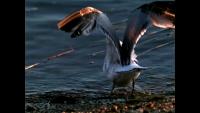 Slow Motion Birds in Flight