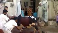 Dangerous Cow Qurbani in Lahore