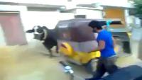 Cow Ki Takkar.. Must Watch
