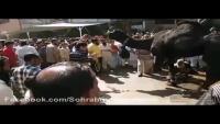 Black Camel Qurbani 2013