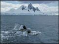 Amazing Nature & Incredible Animal Moments