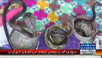 Tafteesh 28th April 2014 Monday at Samaa News TV