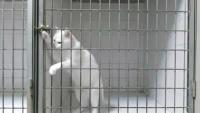 Prison Break by Cat