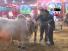 Dada Giri In Cow Mandi Must Watch
