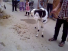 Goat & Cow Fighting Amazing video Must Watch