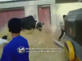 Best Cow Attack Compilation - Must Watch