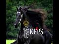 The KFPS Royal Friesian Horse
