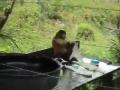 Monkey Washing Cloths