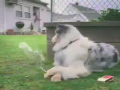 Smoker Dog