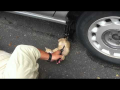Cat helping to change tire :)