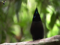 Beautiful Dancing Birds