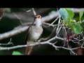 Beautiful Singing Birds