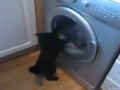 Cat vs Washing Machine