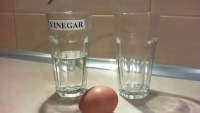 Bouncing Ball Made By Egg And Vinegar