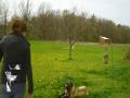 Funny Animal Hits