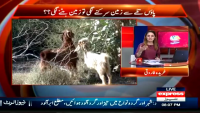 G for Gharida 20th June 2015
