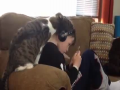 Cat Need To Be Loved