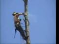 Tree Cutting Fails