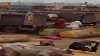 Sohrab Goth Gai Mandi Cows Unloading In Mandi 2016