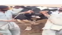 King Of Keemari Jinnah Cattle Farm 2015 For Sale