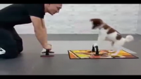How To Workout With Your Dog