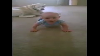 Puppy Teaches Baby To Crawl