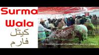 Surmawala Cattle Farm 2016 Sohrab Goth Mandi