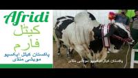 Afridi Cattle Farm 2016 Sohrab Goth Mandi