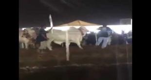 Ramp Walk In Cow Mandi Karachi 2016 Opening Ceremony