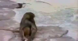 Lol! Check What Happen With Monkey