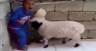 Hahaha... Video Dekh Kai Bataey Kai Kon Jeeta
