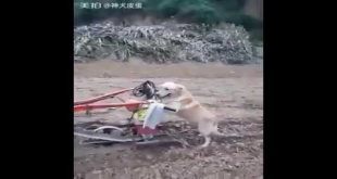 Check What This Dog Doing In The Field