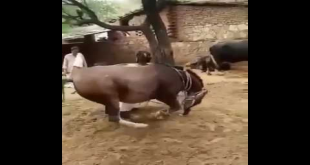 Check The Talent Of This Horse