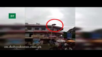 Cow Leaps From The Third Floor Of Building