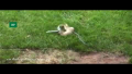 Rabbit Thwarts Snake's Bid To Swallow Her Child