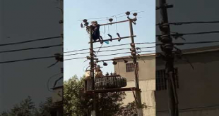 Check How This Guy Save The Life Of Eagle