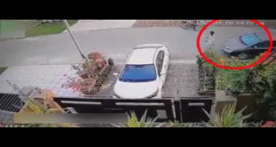 Robbers Get Away With Plants In Karachi