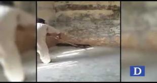 This Guy Caught Ten Feet Long Snake In Jhelum