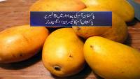 Pakistan can Earn Billion Dollar From Mango