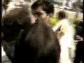 Tariq Azeem Beated by Journalist