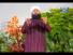 Jashn e Wiladat Manao - Awais Raza Qadri Naat