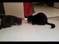 Cats Sharing Food