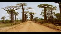 World Most Amazing Trees