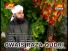 Tum Per Salam Har Dam - Awais Raza Qadri Naat