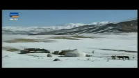 Amazing way of eagle to catch a wolf - Must Watch