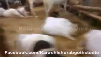 Cafe Piyala Bakra Mandi Karachi 2013 Video