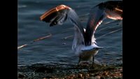 Slow Motion Birds in Flight