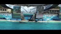 Heart of the Ocean - Whale Show