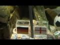 Octopus Predicts England Result Against Germany