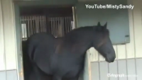 Horse escapes from stable and frees friends.